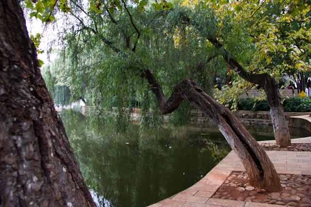 cuihu-park-2889