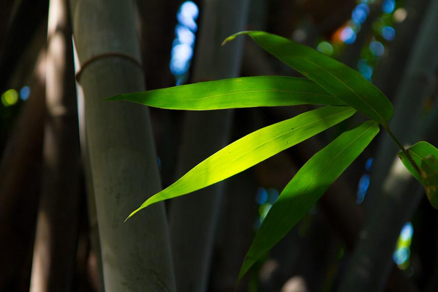 yangshuo_bamboo-8270