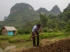 yangshuo_fields-7934