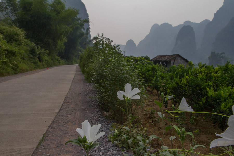 yangshuo_fields-7987