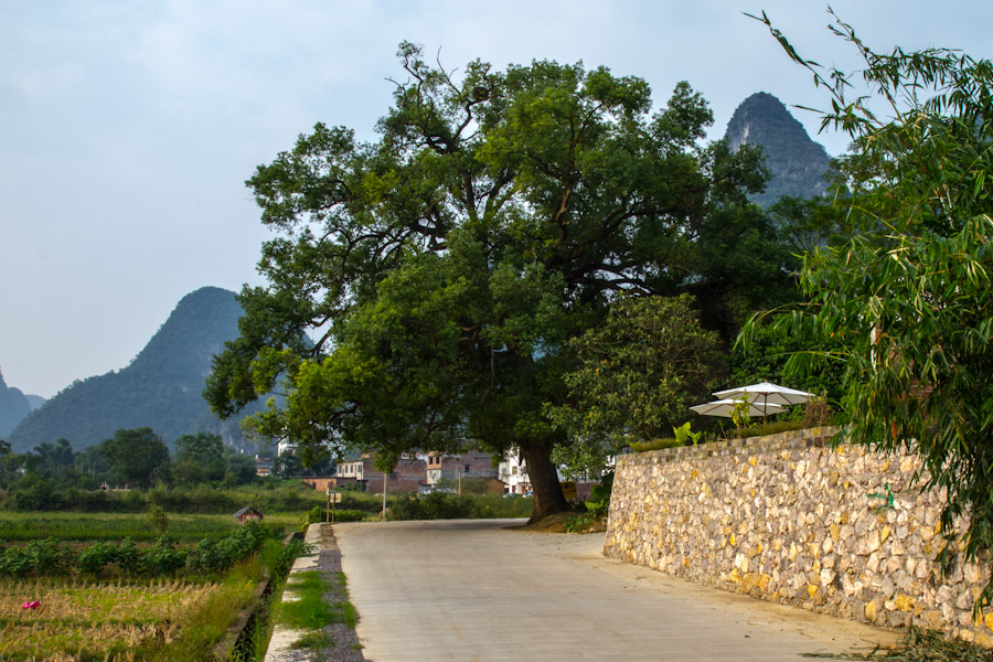 yangshuo_fields2-8086
