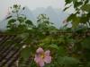 yangshuo_fields-7900